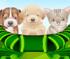Забота о домашних животных